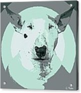 Bull Terrier Graphic 3 Acrylic Print
