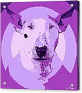 Bull Terrier Graphic 5 Acrylic Print