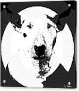 Bull Terrier Graphic 6 Acrylic Print