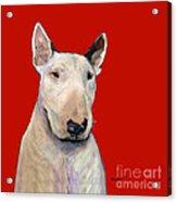 Bull Terrier On Red Acrylic Print