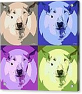Bull Terrier Pop Art Acrylic Print