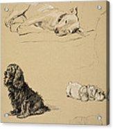 Bull-terrier, Spaniel And Sealyhams Acrylic Print by Cecil Charles Windsor Aldin