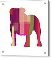 Bulldog Acrylic Print by Naxart Studio