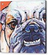 Bulldog Acrylic Print
