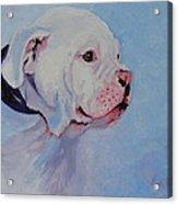 Bulldog Pup Acrylic Print