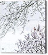 Bullfinch On A Snowy Branch Acrylic Print