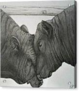 Bullheaded Acrylic Print by Adrienne Giljam