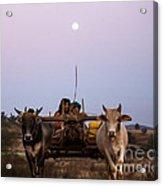Bullock Cart Under Full Moon - Burma Acrylic Print