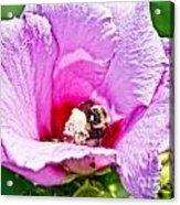 Bumble Bee Iv Acrylic Print