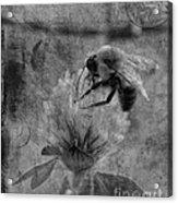 Bumble Bee Post Card 2 Bw Acrylic Print