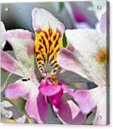 Bumble Bees Acrylic Print