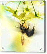 Bumble Going In For The Nectar Acrylic Print