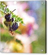 Bumblebee Disco Acrylic Print