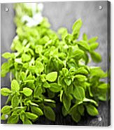 Bunch Of Fresh Oregano Acrylic Print