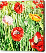 Bunch Of Poppies II Acrylic Print