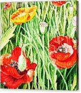 Bunch Of Poppies IIi Acrylic Print