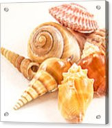Bunch Of Shells Acrylic Print by Jean Noren