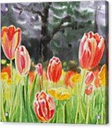 Bunch Of Tulips IIi Acrylic Print