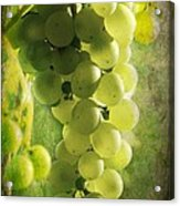Bunch Of Yellow Grapes Acrylic Print