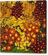 Bunches Of Yellow Copper Orange Red Maroon - Hot Autumn Abundance Acrylic Print