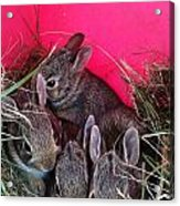 Bunnies In Pink Acrylic Print