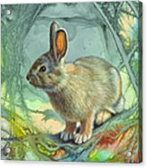 Bunny In Abstract Acrylic Print