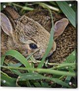 Bunny Twins Acrylic Print