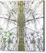 Burden Center Spirit Tree Acrylic Print