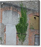 Window With Ivy Acrylic Print