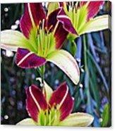 Burgundy And Yellow Lilies 3 Acrylic Print