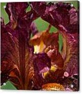 Burgundy Blossom Acrylic Print