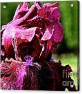 Burgundy Breeze Acrylic Print