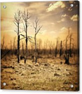 Burned Out Forest Acrylic Print