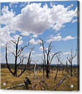 Burned Trees On Colorado Plateau Acrylic Print