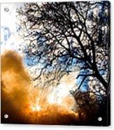 Burning Olive Tree Cuttings Acrylic Print