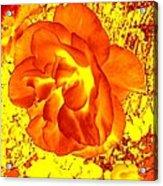 Burning Passion Acrylic Print
