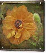 Burnished Poppy Acrylic Print