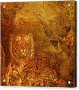 Burnished Tigers Acrylic Print