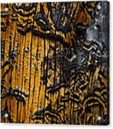 Burnt Beetle Maze  #9991 Acrylic Print