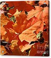 Burnt Orange Acrylic Print