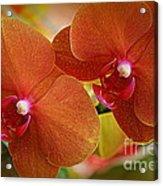 Burnt Orange Orchids Acrylic Print