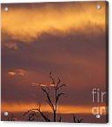 Burnt Orange Sunset Acrylic Print