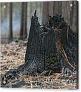 Burnt Tree Trunk Acrylic Print