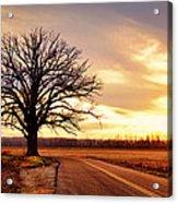 Burr Oak Silhouette Acrylic Print