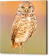 Burrowing Owl II Acrylic Print
