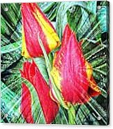 Burst Of Color Acrylic Print by Cathie Tyler
