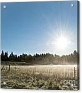 Burst Of Sunshine Acrylic Print