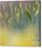 Bursting Into Spring 2 Acrylic Print