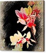 Bursting Magnolias Acrylic Print