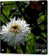 Bursting With Beauty Acrylic Print